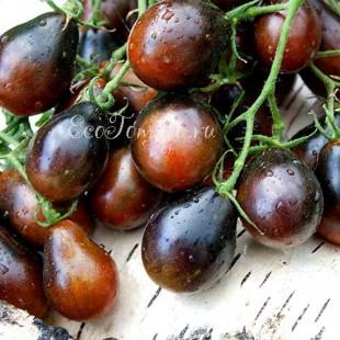 Сорт томата Black Keyes (Черные клавиши), Франция