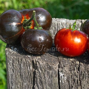 Сорт томата Blueberry (Голубика/Черника)