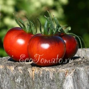 Сорт томата Bosque Blue (Боске Блу)
