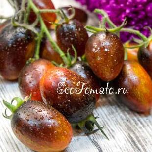 Сорт томата Brad's Atomic Grape (Атомный виноград Бреда), США