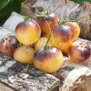 Сорт томата Great White Purple (Грейт вайт пурпл), США