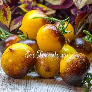 Сорт томата H-34 Rot (желтый) / Belle coeur, США