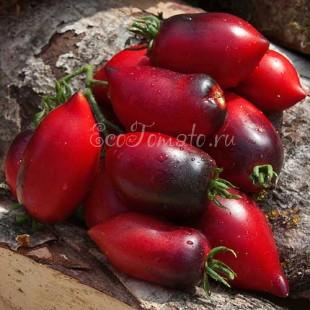 Сорт томата Pascal de Picardie (Паскаль де Пикарди), США