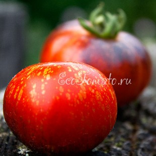 Сорт томата Red Beauty (Красная красота), США