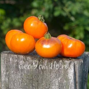 Сорт томата Sun Blue (Сан Блу, Голубое Солнце, США)