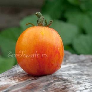 Сорт томата Beauty Princess (Красота принцессы), США