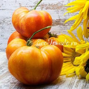 Большая Радуга, двухцветный сорт томата