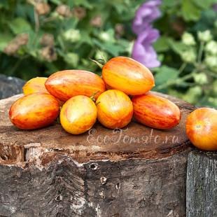 Сорт томата Blush (Блаш, Румянец), США