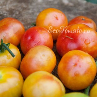 Сорт томата Rainbow Cherry (Черри Радуга)