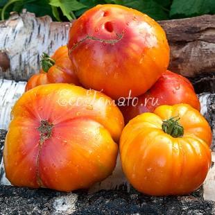 Сорт томата DeWeese Streaked (ДеВизе Страйкед), США