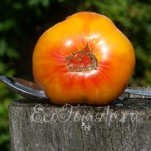 Сорт томата Грейпфрут