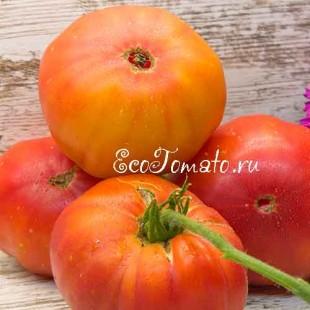 Сорт томата Hillbilly (Деревенские, Хилбили), США