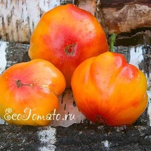 Сорт томата Jerusalem Giant (Гигант Иерусалима)