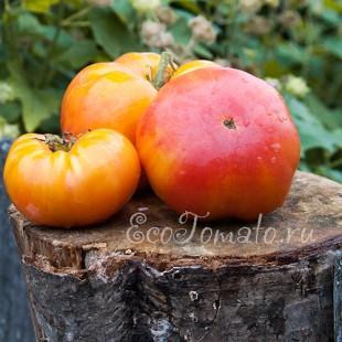 Сорт томата Lucky Cross (Лаки Кросс), США