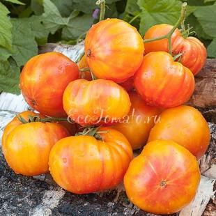 Сорт томата Marzipan Gold (Золотой Марципан)