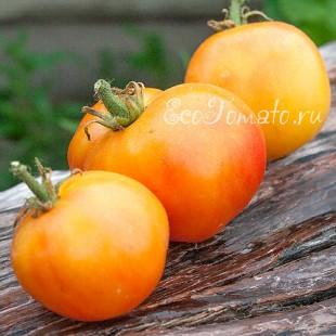 Сорт томата Peach Blow Sutton (Персик блов саттон)