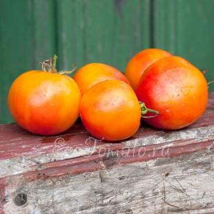 Сорт томата Pineapple Fog (Туманный ананас), США