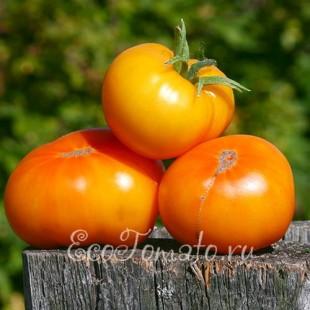 Сорт томата Tasmanian Blushing Yellow (Тасманское покраснение), Австралия