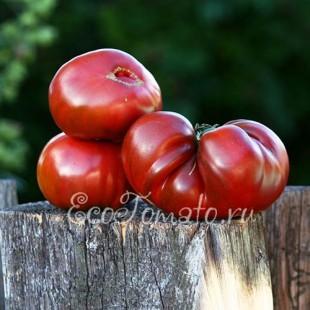 Сорт томата Черный Крым