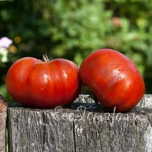 Сорт томата Black giant (Черный Гигант), США
