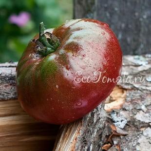 Сорт томата Black Star (Черная Звезда), США