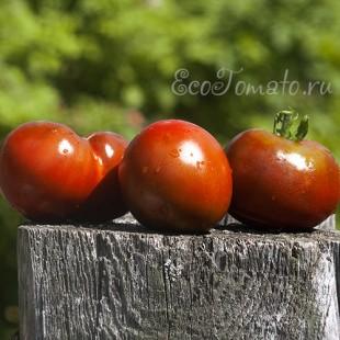 Сорт томата Black Yum Yum (Черный Юм Юм, Черная Конфетка), США