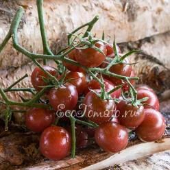 Black cherry (Черный черри), США