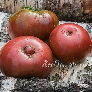 Сорт томата Blue Estland (Голубая Эстония)