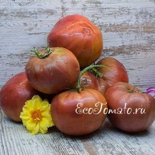 Сорт томата Blue Ridge Black (Блу ридж блек, Голубой Хребет черный), США
