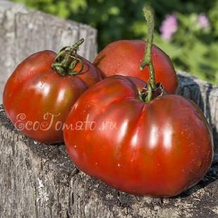 Сорт томата Brown Flesh (Коричневая плоть), США