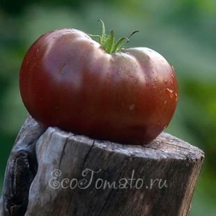 Сорт томата Черный Маслянистый