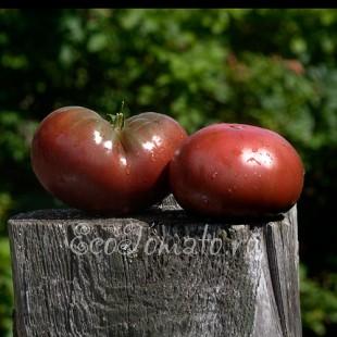 Сорт томата Cuba giant black (Гигант Кубы черный, США)