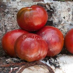 Сорт томата Кирюха