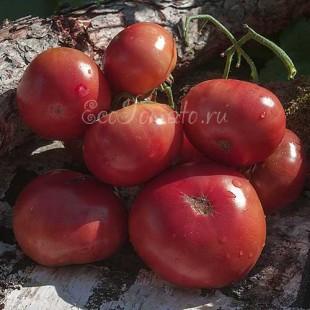 Сорт томата Not Purple Strawberry (Не фиолетовая клубника)