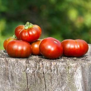 Сорт томата Purple Smudge (Пурпурный смог, США)
