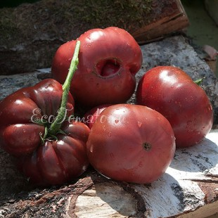 Сорт томата Синий