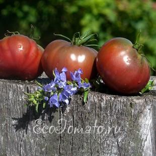 Сорт томата Southern Naght, Южная Ночь