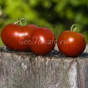 Сорт томата Svart (Сварт), США