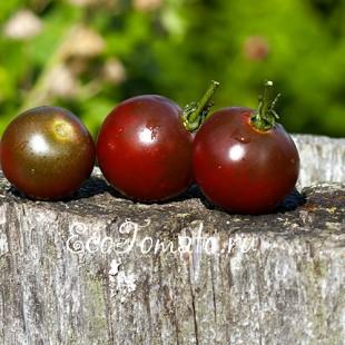 Сорт томата Виноград Черный