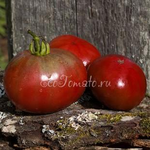 Сорт томата Vorlon (Ворлон), США