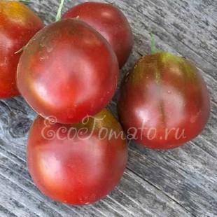 Сорт томата Черномор