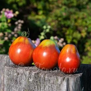 Сорт томата Груша черная
