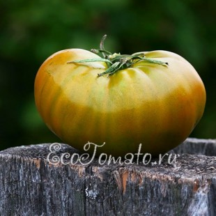 Сорт томата Чероке Грин