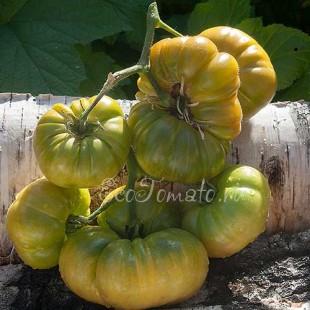 Сорт томата Delano (Делано), США