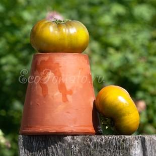 Сорт томата Evergreen Tasty (Евергрин Тести), США