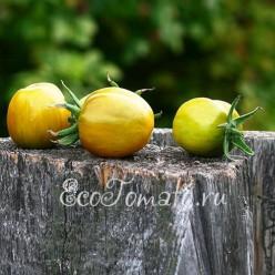 Green Bell Pepper (Зеленый перец), США
