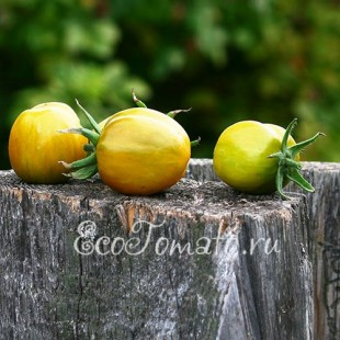 Сорт томата Зеленый Перец