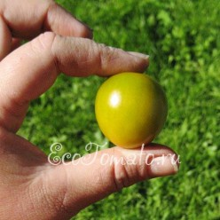 Зеленый виноград (Green Grape), США
