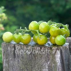 Green Doctors Frosted (Заиндевевший доктора, зеленый, США)