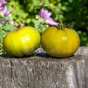 Сорт томата Green Pineapple (Зеленый Ананас), США